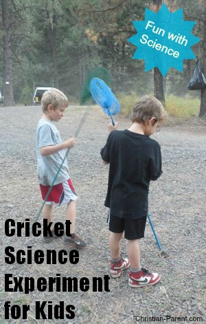 cricket science experiments